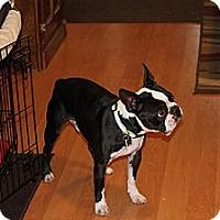 Adopt A Pet :: Duke - Lynnwood, WA