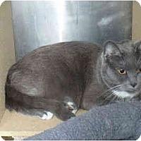 Adopt A Pet :: Ashley - Colmar, PA