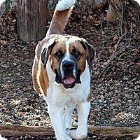 Adopt A Pet :: Ramses - Denver, CO