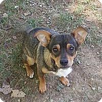 Adopt A Pet :: Nacho - Russellville, KY