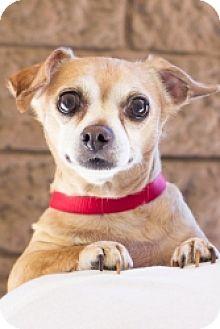 Chihuahua Mix Dog for adoption in Mesa, Arizona - Peanut