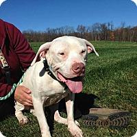 Adopt A Pet :: Kai - Medina, OH