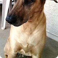 Adopt A Pet :: Sunny - Gilbert, AZ