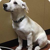 Adopt A Pet :: Pina - Woodstock, ON