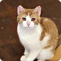 Adopt A Pet :: Phoenix - San Antonio, TX
