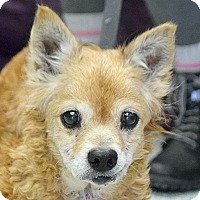 Adopt A Pet :: Diana - Huntley, IL