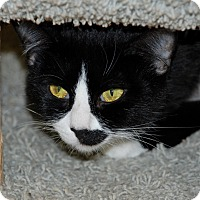 Adopt A Pet :: Wild Thing - Salem, WV