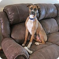 Adopt A Pet :: Feona - Winchester, VA