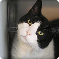 Adopt A Pet :: Smokey Mo - Lincoln, NE