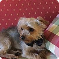 Adopt A Pet :: Prince - Conroe, TX