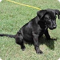 Adopt A Pet :: Joey - Worcester, MA