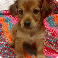 Adopt A Pet :: Winona (ARSG) - Santa Ana, CA