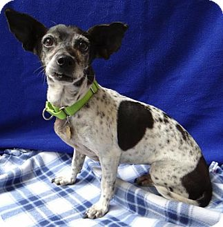 Terrier (Unknown Type, Medium) Mix Dog for adoption in Seal Beach, California - Dory