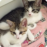 Adopt A Pet :: Little Man & Millie - Novato, CA
