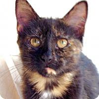 Adopt A Pet :: Pita - Potomac, MD