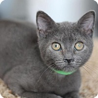 Adopt A Pet :: Fred H - Raleigh, NC