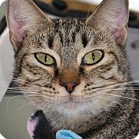 Adopt A Pet :: Emmy - Georgetown, TX