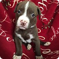 Adopt A Pet :: Rea - San Diego, CA