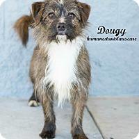 Adopt A Pet :: Dougy - Modesto, CA
