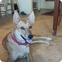 Adopt A Pet :: Zooey - Jacumba, CA