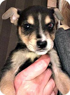 Large Breed Dog Adoption Colorado