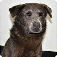 Adopt A Pet :: Nickle - Port Washington, NY