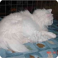 Adopt A Pet :: Snow White - Pendleton, OR