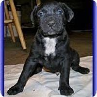 Adopt A Pet :: Geo - Staunton, VA
