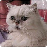 Adopt A Pet :: Austin - Davis, CA