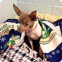 Adopt A Pet :: Ginger - Muskegon, MI