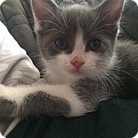Adopt A Pet :: Fizzy - Byron Center, MI