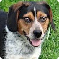 Adopt A Pet :: Sam - Lancaster, OH