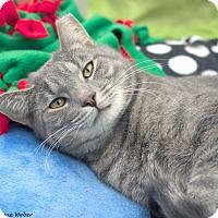 Adopt A Pet :: Brady - St Louis, MO