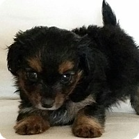 Adopt A Pet :: MIM - Higley, AZ
