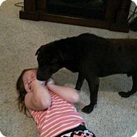 Adopt A Pet :: Bentley in GA - pending - Mira Loma, CA