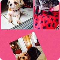 Adopt A Pet :: Angel & Sophia - LEXINGTON, KY