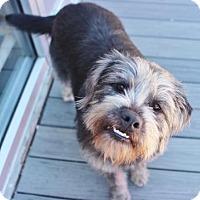 Adopt A Pet :: Bella Boo - Smyrna, GA