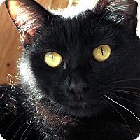 Adopt A Pet :: Ronnie JamesDio - St. Louis, MO