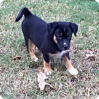 Adopt A Pet :: ASPEN - CHICAGO, IL