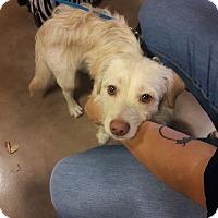 Adopt A Pet :: Fabio - San Antonio, TX