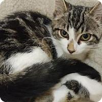 Adopt A Pet :: Freckle - Pending - Richmond Hill, ON