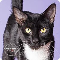 Adopt A Pet :: Jazz - Apache Junction, AZ