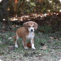 Adopt A Pet :: Sharkey - Groton, MA
