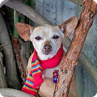 Adopt A Pet :: *San Benito County -- LONGEST RESIDENT - Pittsburg, CA