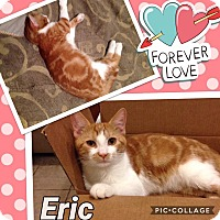 Adopt A Pet :: Eric - Keller, TX