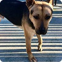 Adopt A Pet :: Roscoe - Goodlettsville, TN