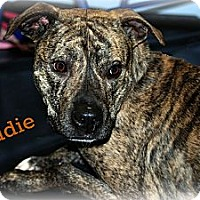 Adopt A Pet :: Eddie - PENDING, in Maine - kennebunkport, ME