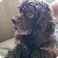 Adopt A Pet :: Suzie - Coral Springs, FL