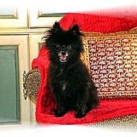 Adopt A Pet :: King - conroe, TX