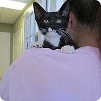 Adopt A Pet :: Magic, Adam, Asher - Island Park, NY